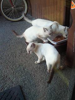 外猫&旅人